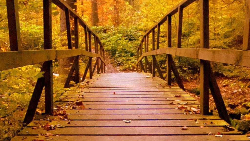 Soothing photo of bridge, illustrating there is help available with filing for unemployment.